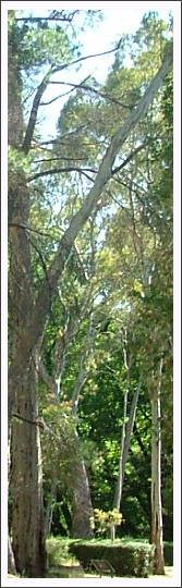 Wirrabara Forest